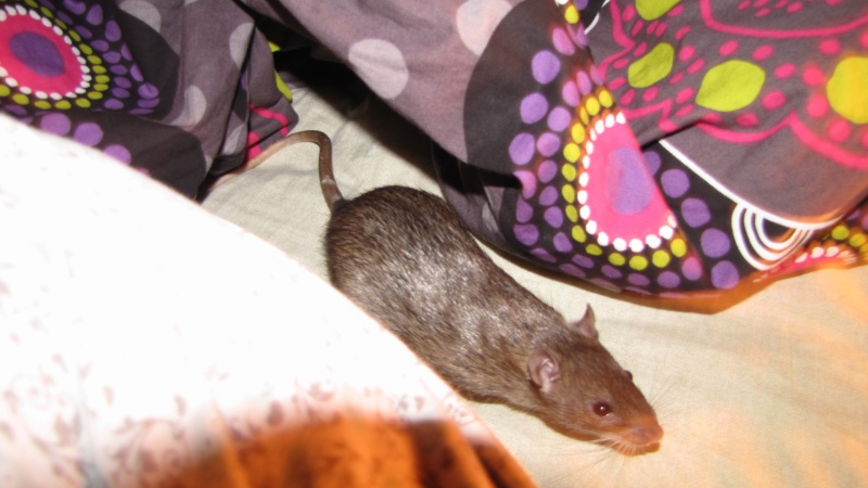 Sauvetage des 7 petits ratons - Page 2 Img_0012