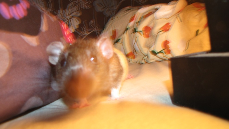 Sauvetage des 7 petits ratons - Page 2 Img_0013