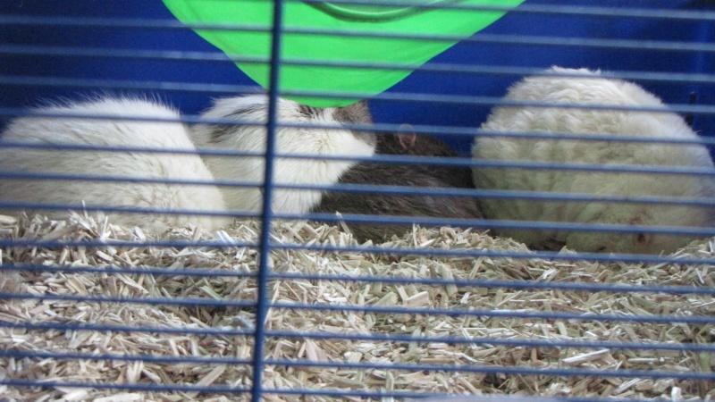 Sauvetage des 7 petits ratons - Page 2 Img_0110