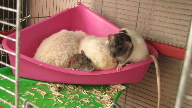 Sauvetage des 7 petits ratons - Page 2 Img_0113