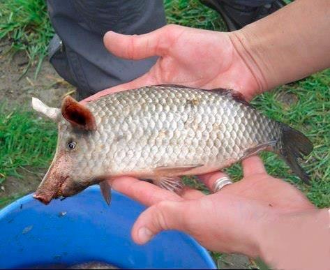 Drôle de pêche! Image010