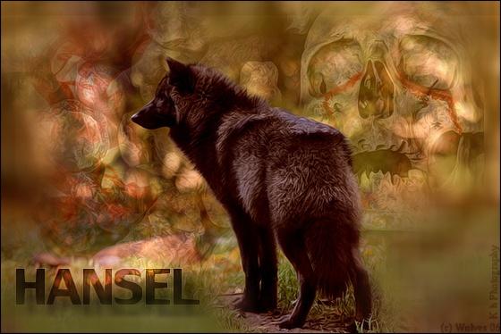 Hansel ~ Solitaire ~ 1 ans Hansel10