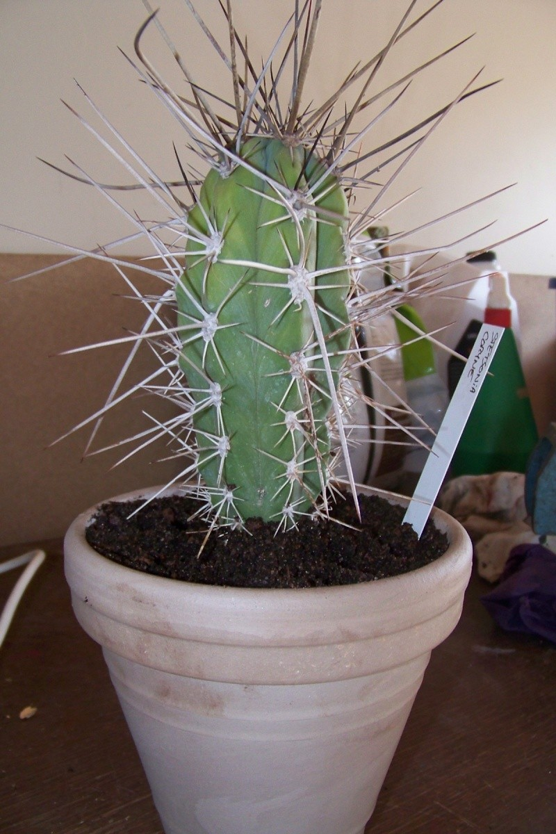 Nouveaux cactus a l'horizon. 00113