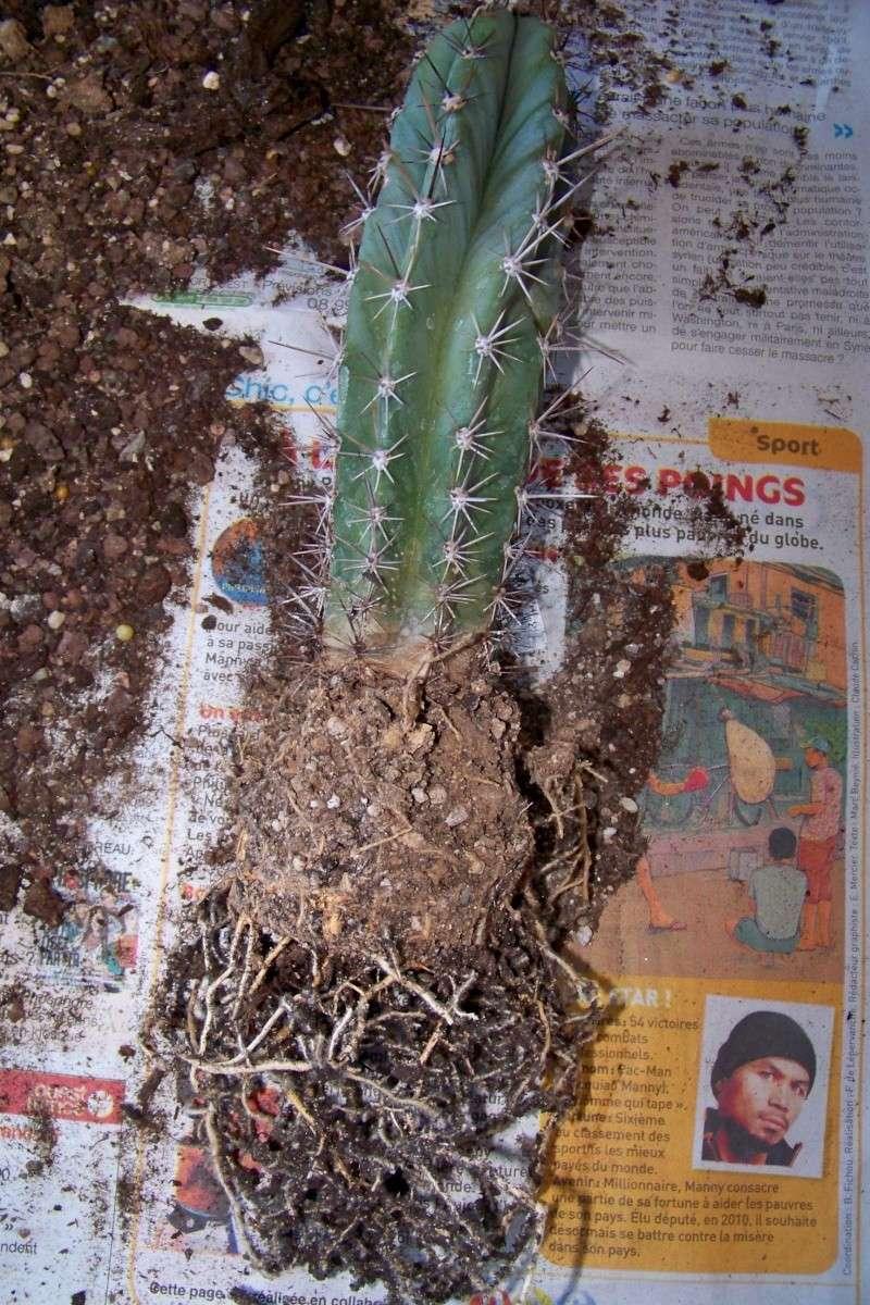 Rempotage de mes cactus! 00210