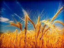 Ladang Tuhan Baru