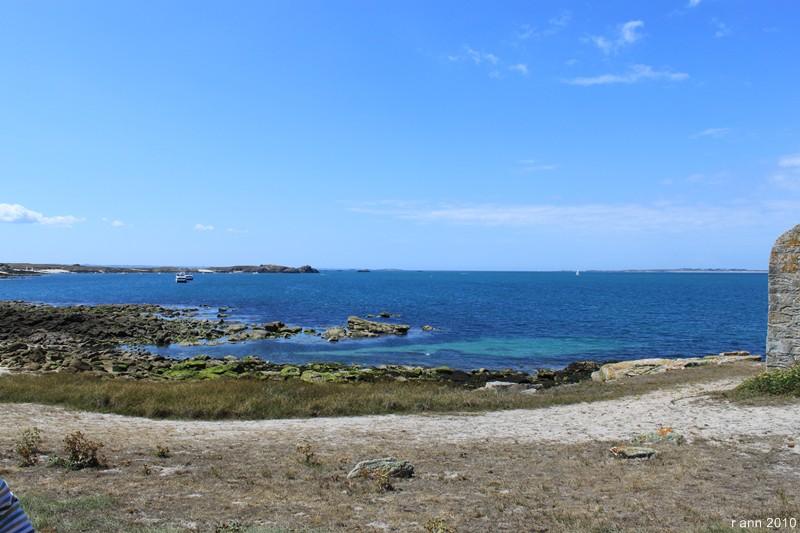 Espèce indigène du Morbihan le goéland padaire... Img_2215