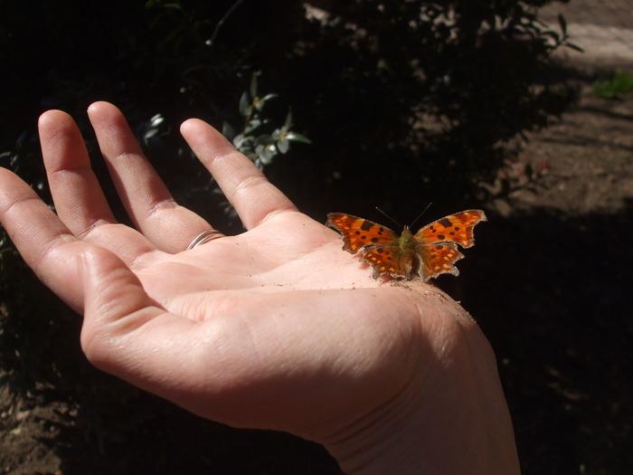 papillons 12229310