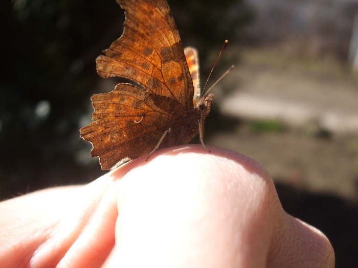 papillons 12229411