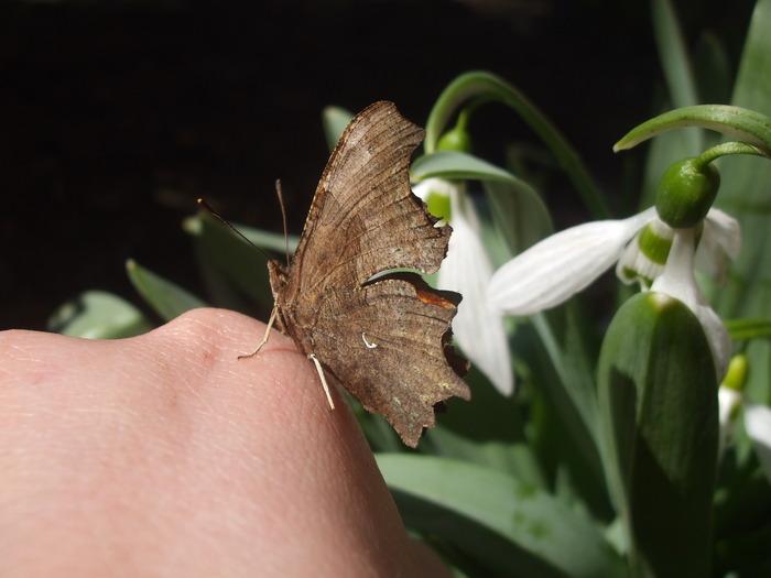 papillons 12229412