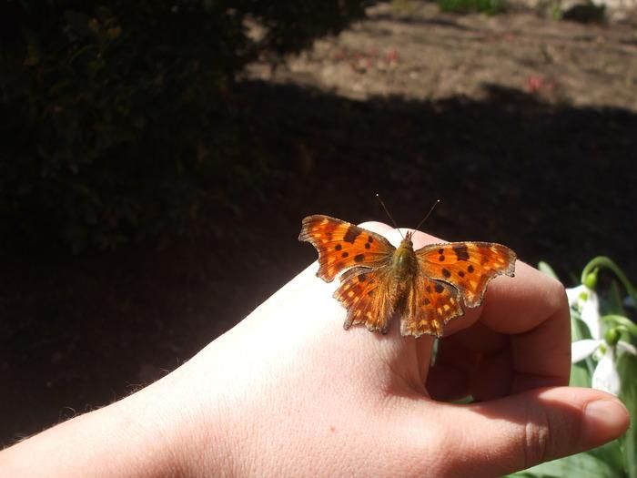 papillons 12229810