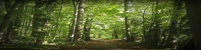 #bosque#