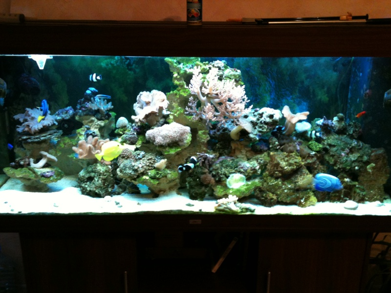mon aqua recifal Photo10