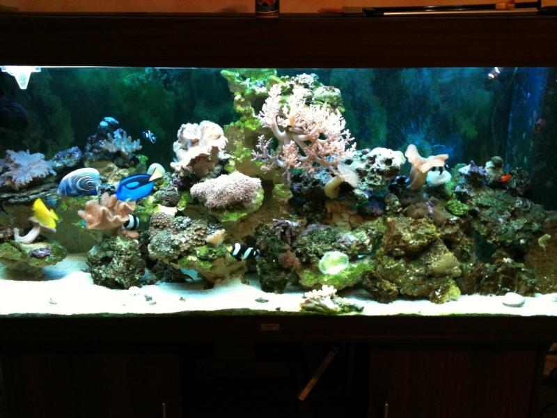 mon aqua recifal Photo210