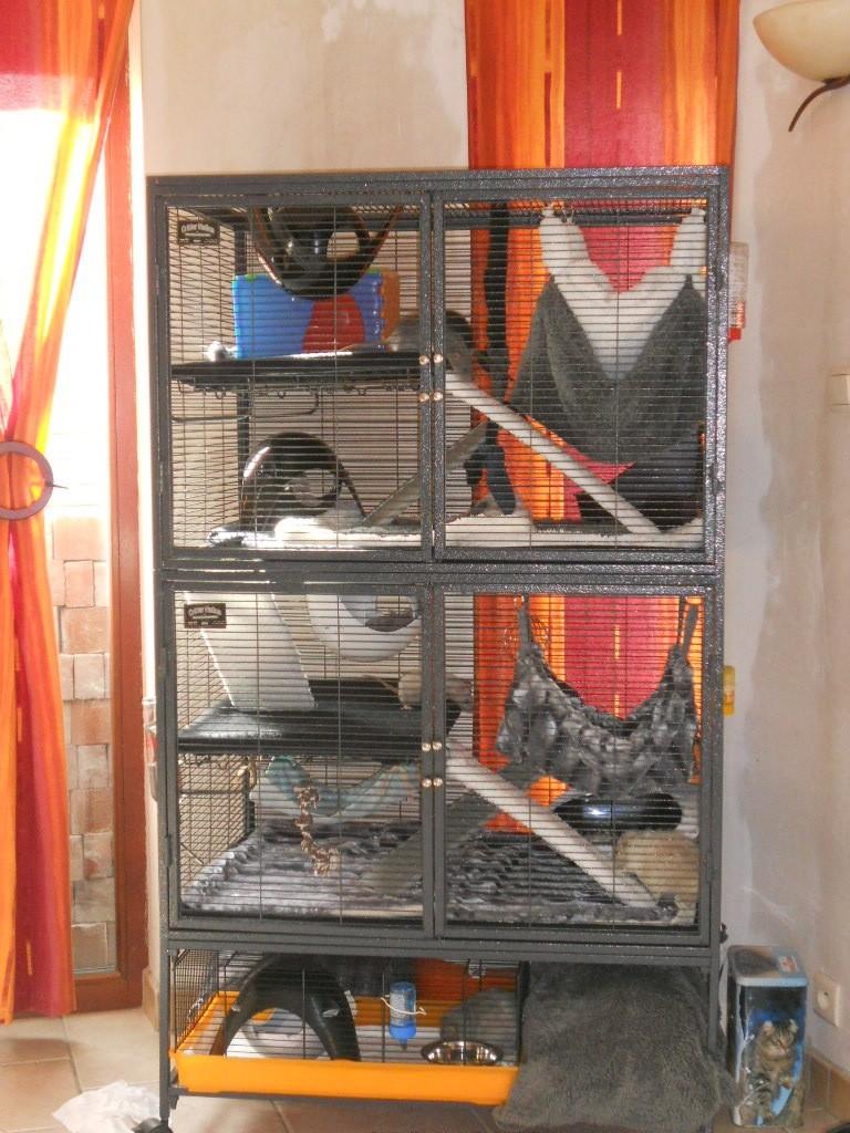 Photos de vos cages - Page 37 Dscn2110