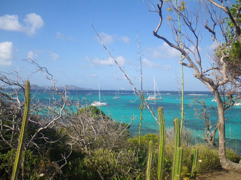 13 jours aux Grenadines..... - Page 3 Barada10