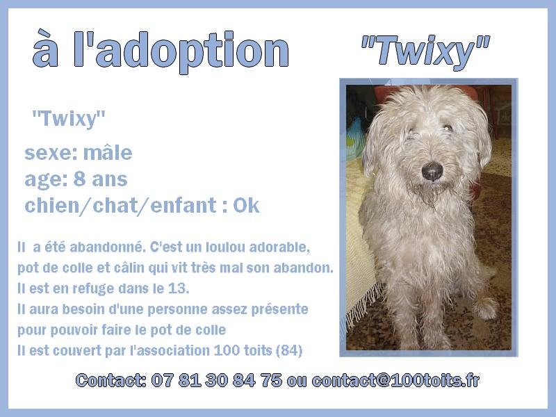 Twixy, trop mignon et sans famille [Adopté] Twixy10