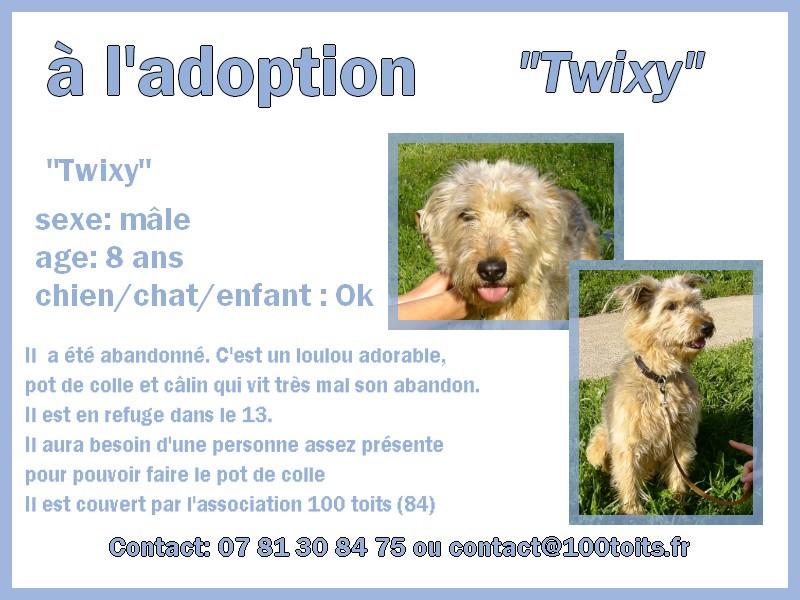 Twixy, trop mignon et sans famille [Adopté] Twixy11