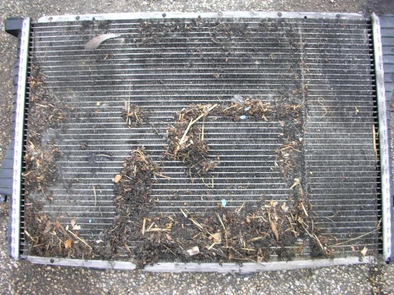 changement radiateur moteur  Dscn8819
