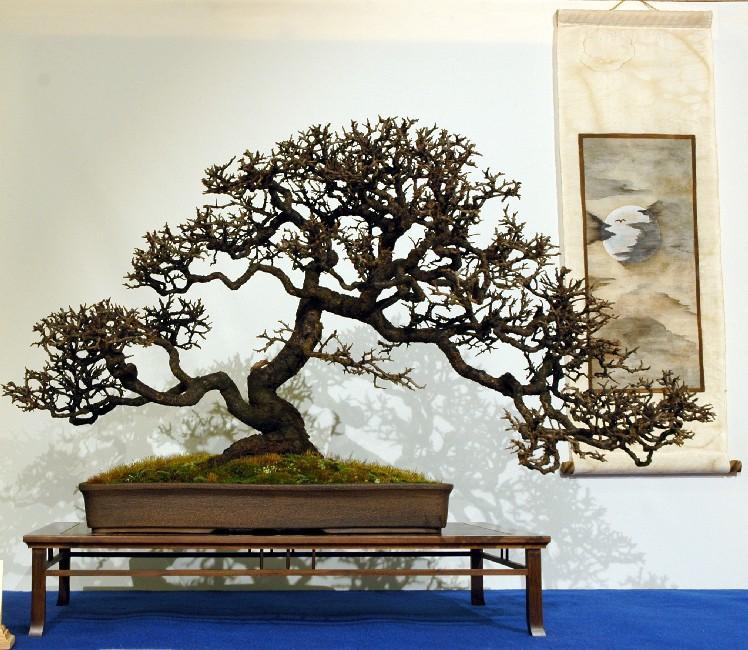 Prunus Spinosa Prunus11