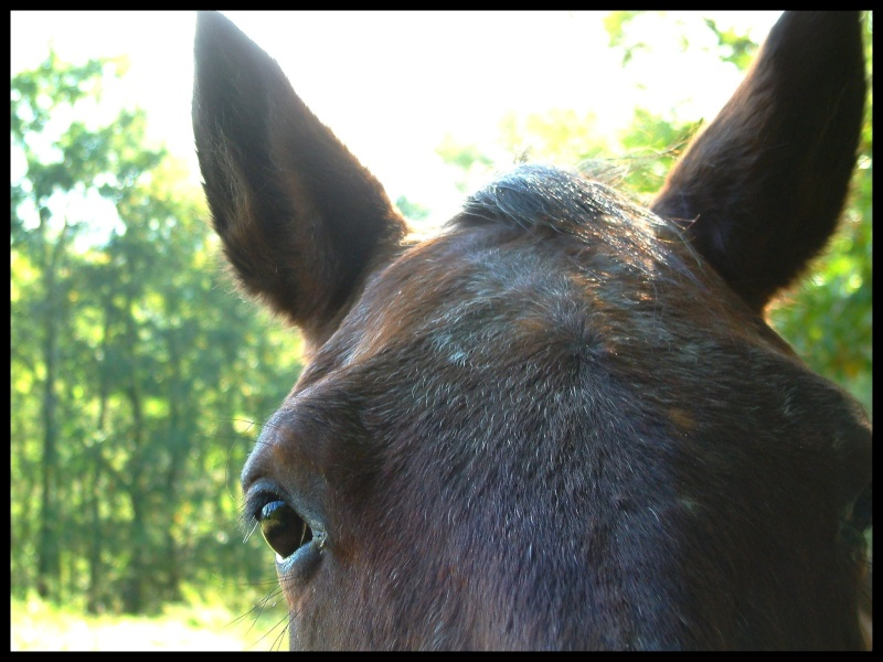 CONCOURS PHOTOS, L'oeil des chevaux ! - Page 2 Dscf0011