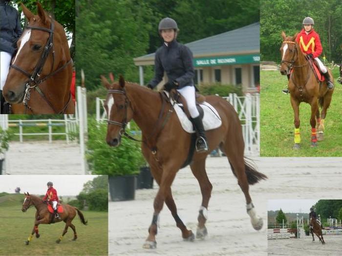 EDB Horse10