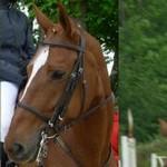 EDB Horse110