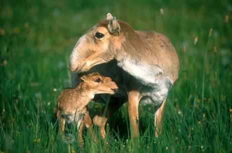 Les macs de la mignonnitude du règne animal - Page 2 08032710