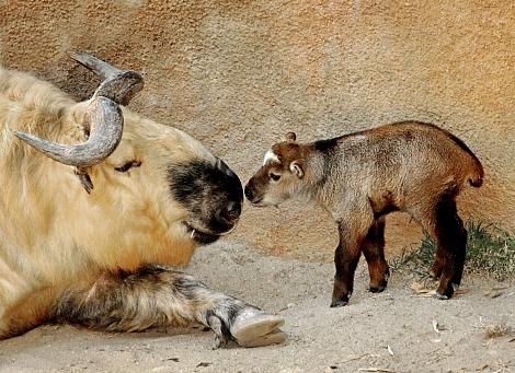 Les macs de la mignonnitude du règne animal - Page 2 Untitl10