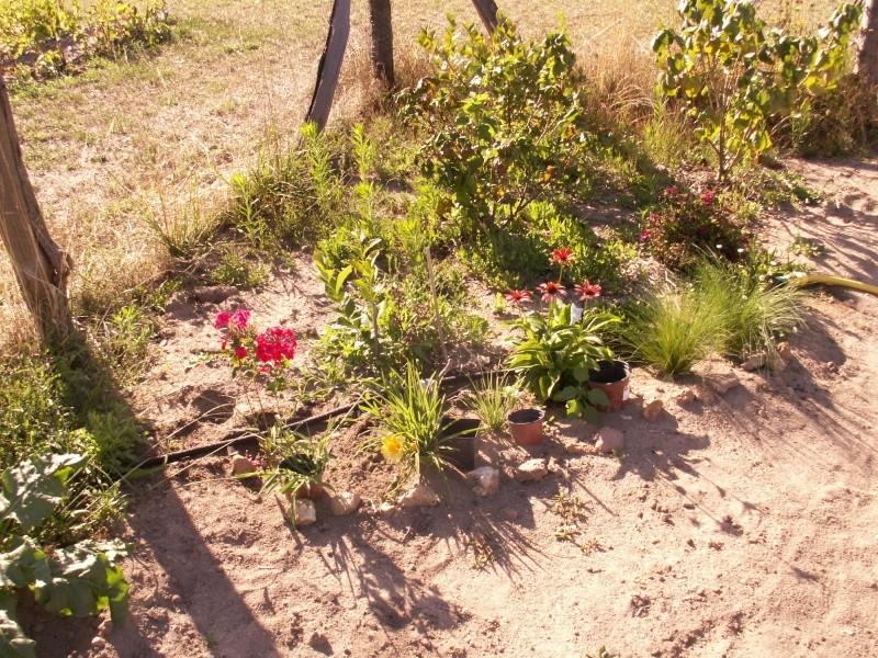 Résultats de nos échanges sur Jardin Passion  - Page 2 Pict1710