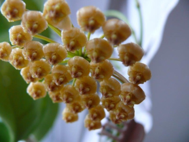 Blüten 2013 Benito11