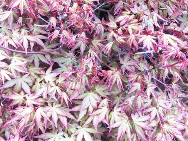 acer  Img_8515