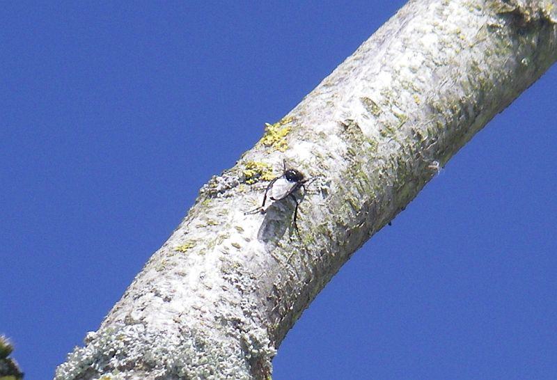 Photos d'insectes  Bib110