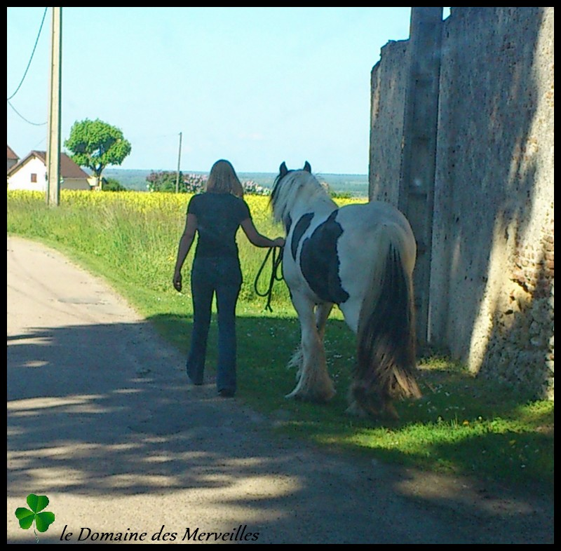Cillbarra Léo, hongre Irish Cob au Domaine des Merveilles - Page 5 04-08-13