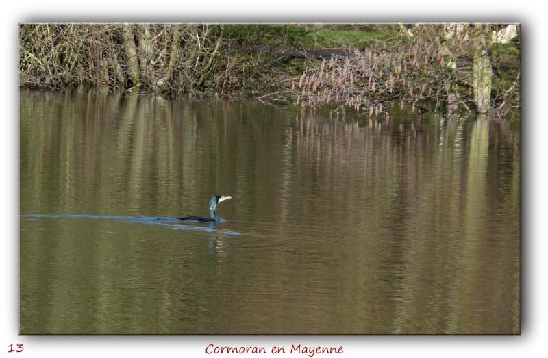 Des habitués de l'étang près de chez moi... P1090411
