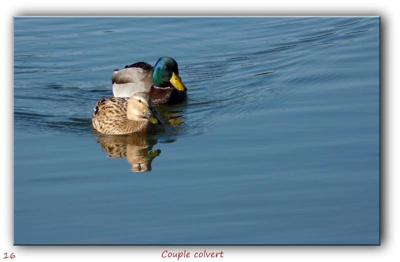 Des habitués de l'étang près de chez moi... P1090416