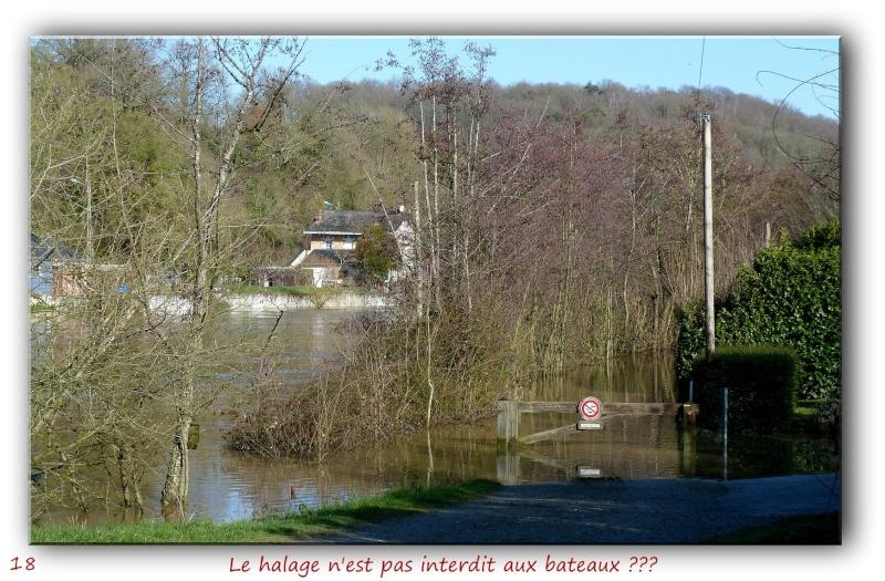 Des habitués de l'étang près de chez moi... P1090418