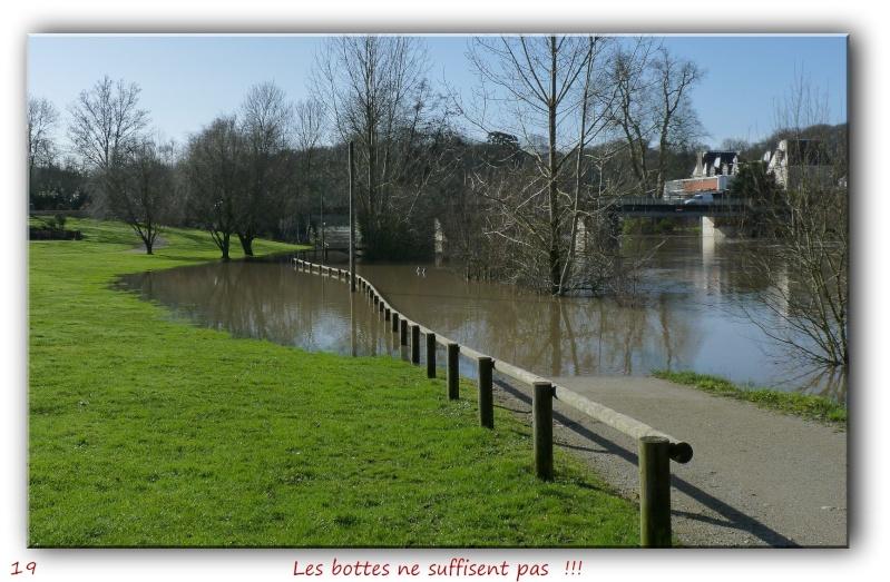 Des habitués de l'étang près de chez moi... P1090419
