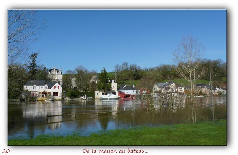 Des habitués de l'étang près de chez moi... P1090420