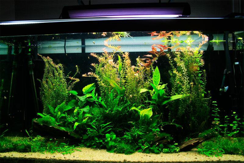Mur végétal avec aquarium de 320L ---> Paludarium - Page 3 _mg_1510