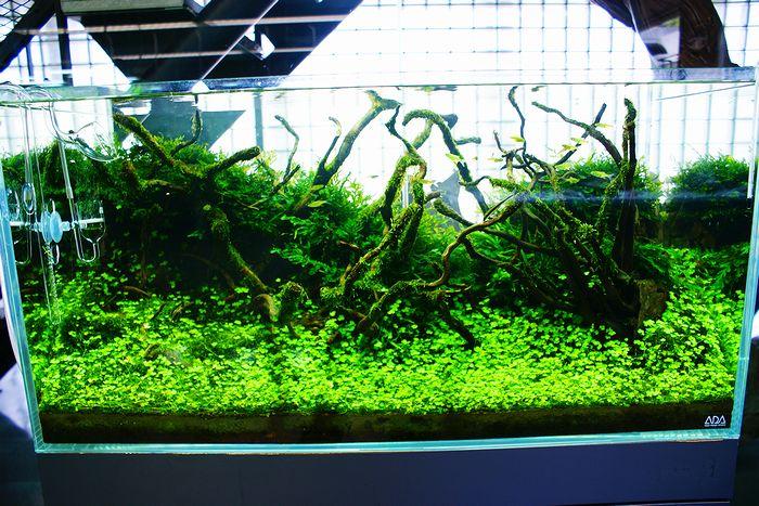 Mur végétal avec aquarium de 320L ---> Paludarium - Page 4 Blog_l10