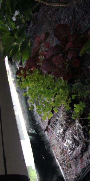 Mur végétal avec aquarium de 320L ---> Paludarium - Page 3 Chute_10