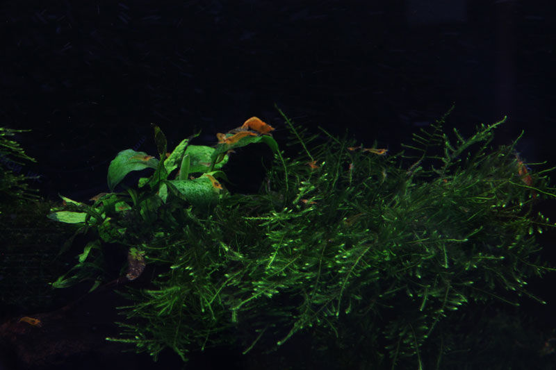 Mur végétal avec aquarium de 320L ---> Paludarium - Page 3 Img_9310
