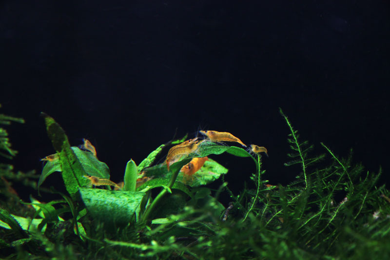 Mur végétal avec aquarium de 320L ---> Paludarium - Page 3 Img_9311