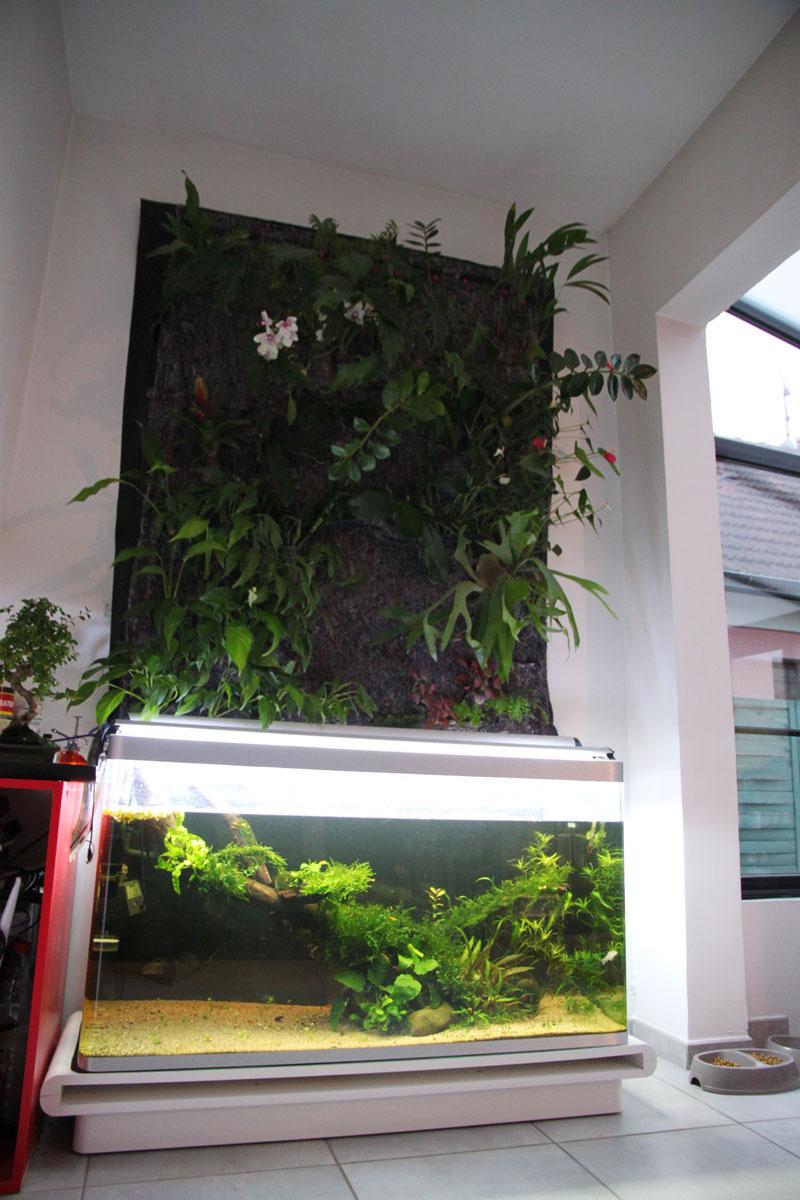 Mur végétal avec aquarium de 320L ---> Paludarium - Page 3 Img_9410