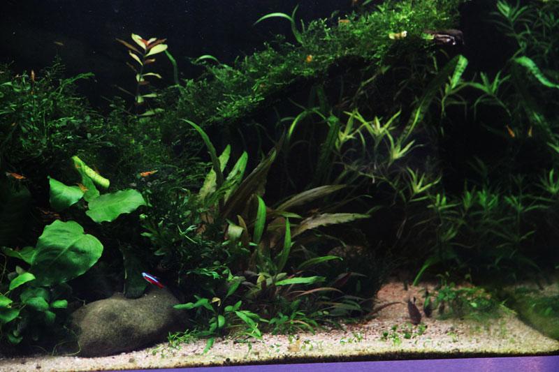 Mur végétal avec aquarium de 320L ---> Paludarium - Page 3 Img_9412