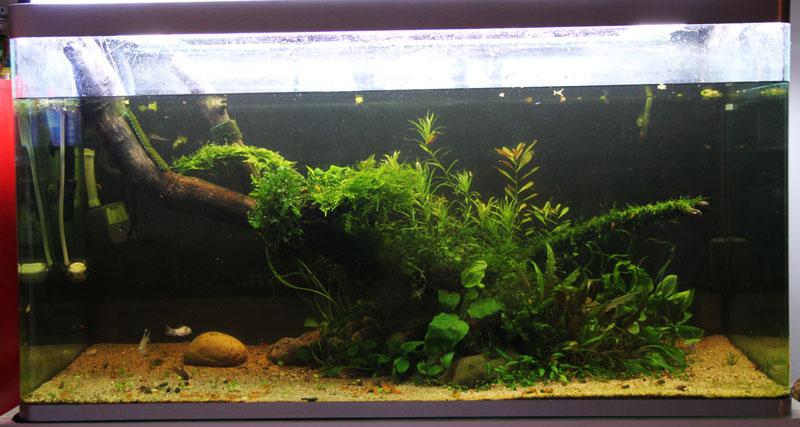 Mur végétal avec aquarium de 320L ---> Paludarium - Page 4 Img_9810
