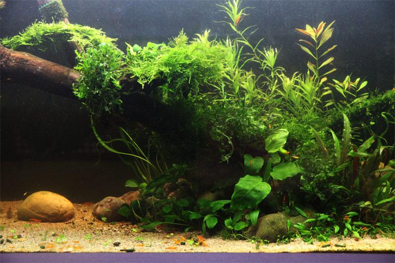 Mur végétal avec aquarium de 320L ---> Paludarium - Page 4 Img_9811