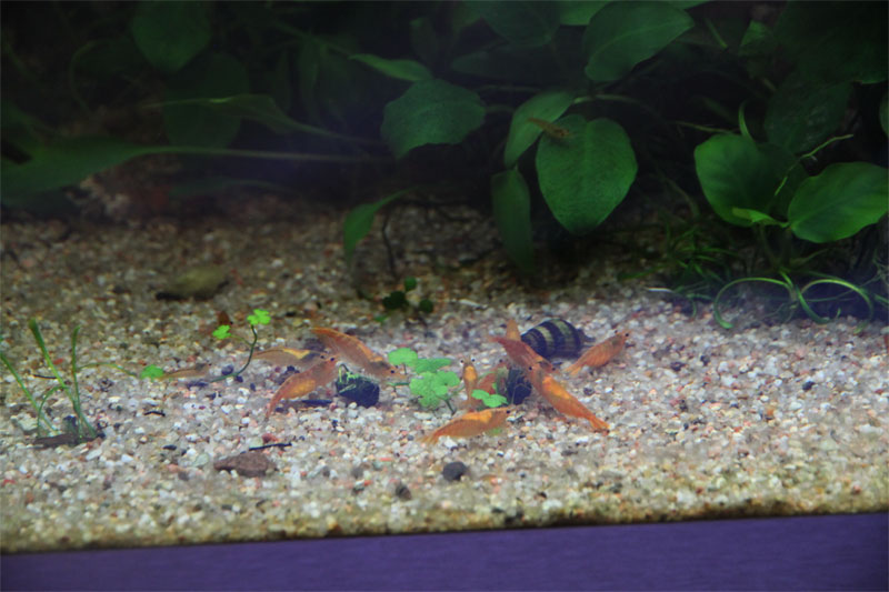Mur végétal avec aquarium de 320L ---> Paludarium - Page 4 Img_9812