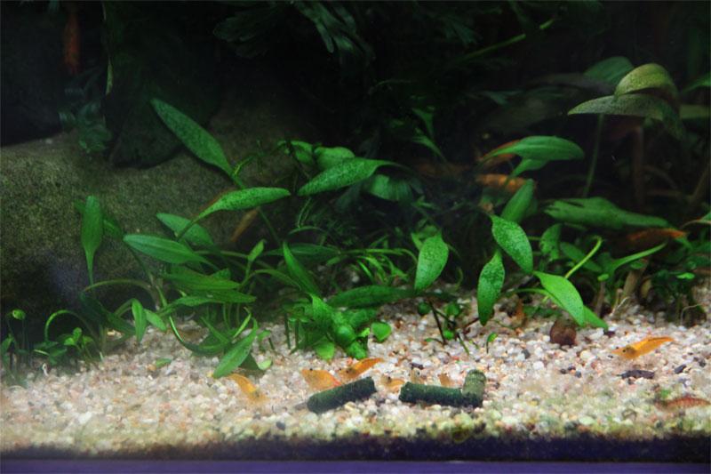 Mur végétal avec aquarium de 320L ---> Paludarium - Page 4 Img_9813