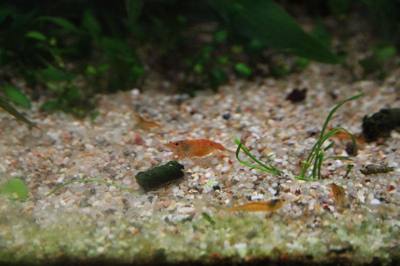 Mur végétal avec aquarium de 320L ---> Paludarium - Page 4 Img_9814